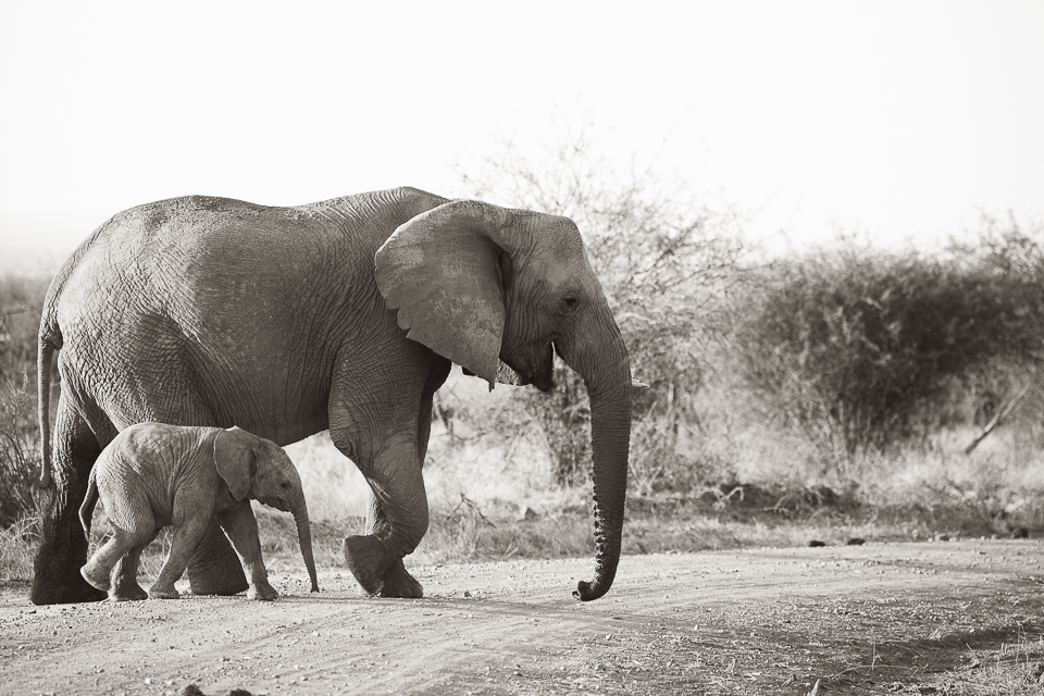 Madikwe, shelley burt, bush breaks, holidays, bushveld holidays, wildlife, elephants