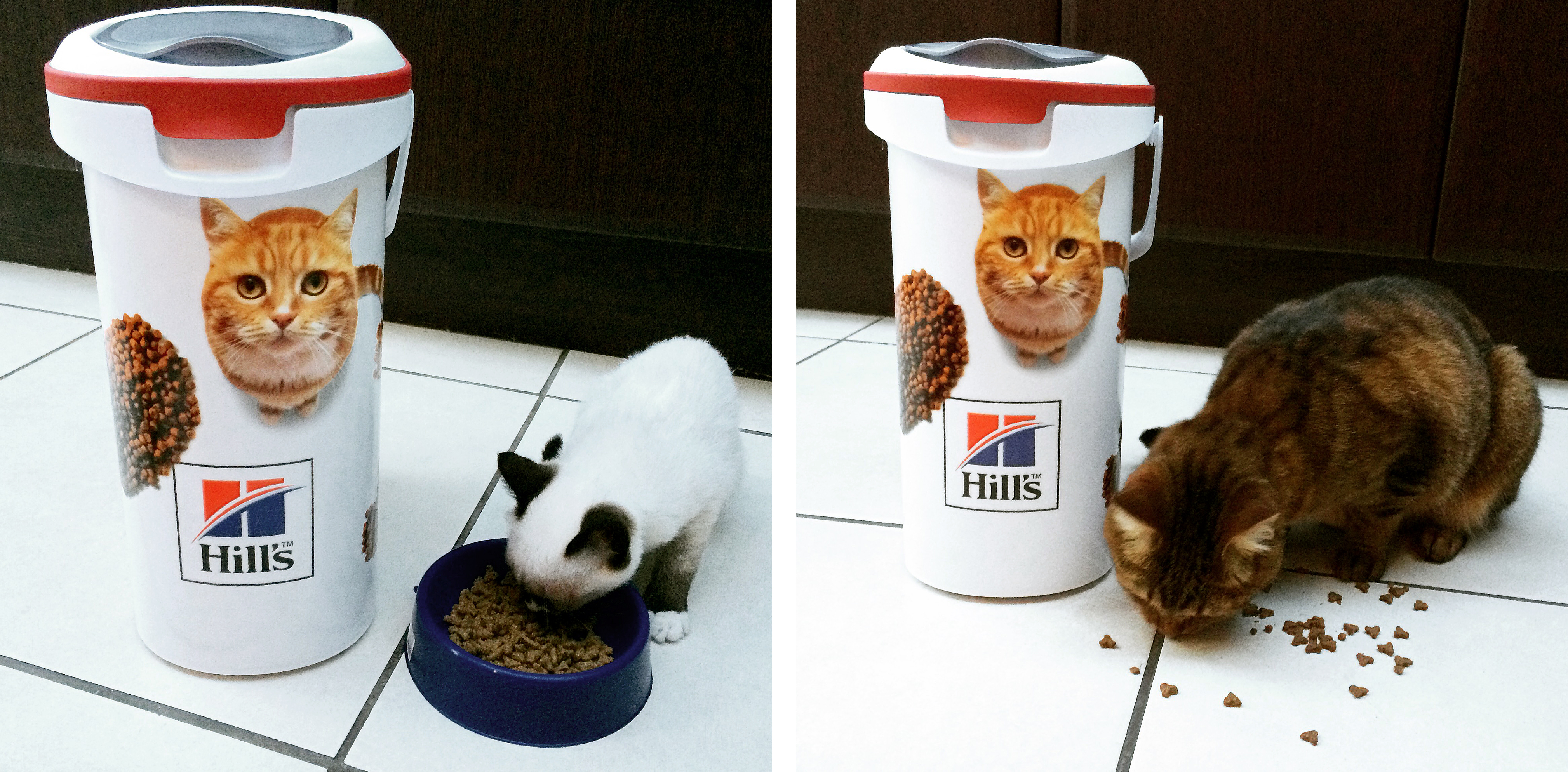 My cats Asterix (left) and Archimedes (right) enjoying their new Hill's Pet Nutrition Foodie Bin (pic taken with my iPhone)