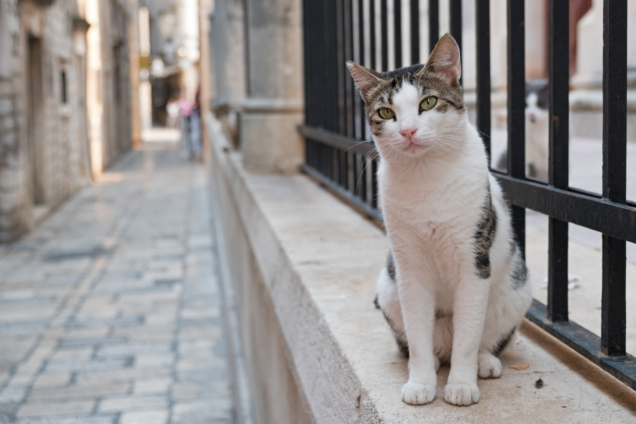 The cats in Dubrovnik are still one of my favourite things (though I did find out there are cats through out the country)